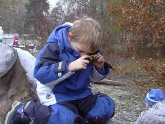 Dreng tager billede af frost på en træstub